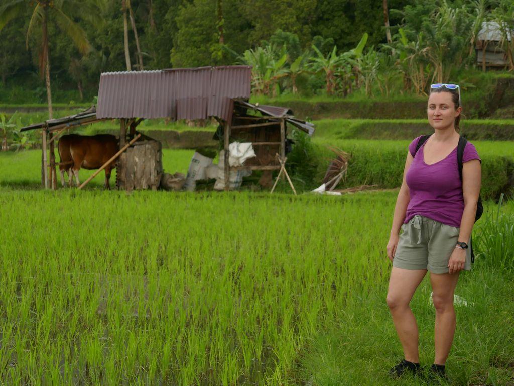 Emi dans les rizières