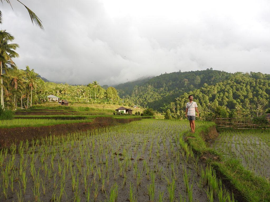 Nico dans les rizières