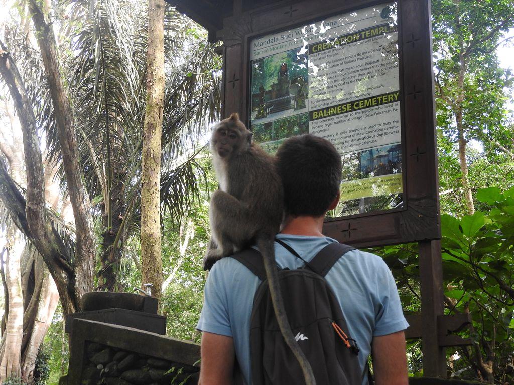 Monkey Nico