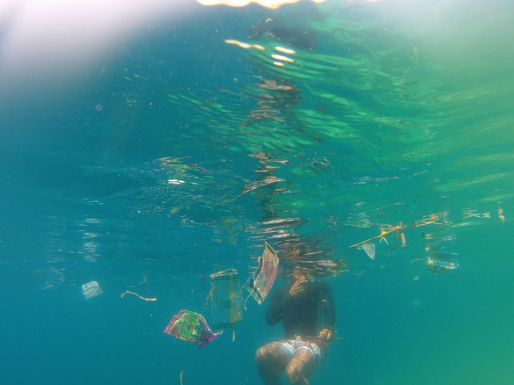 Plastique ou méduses ?
