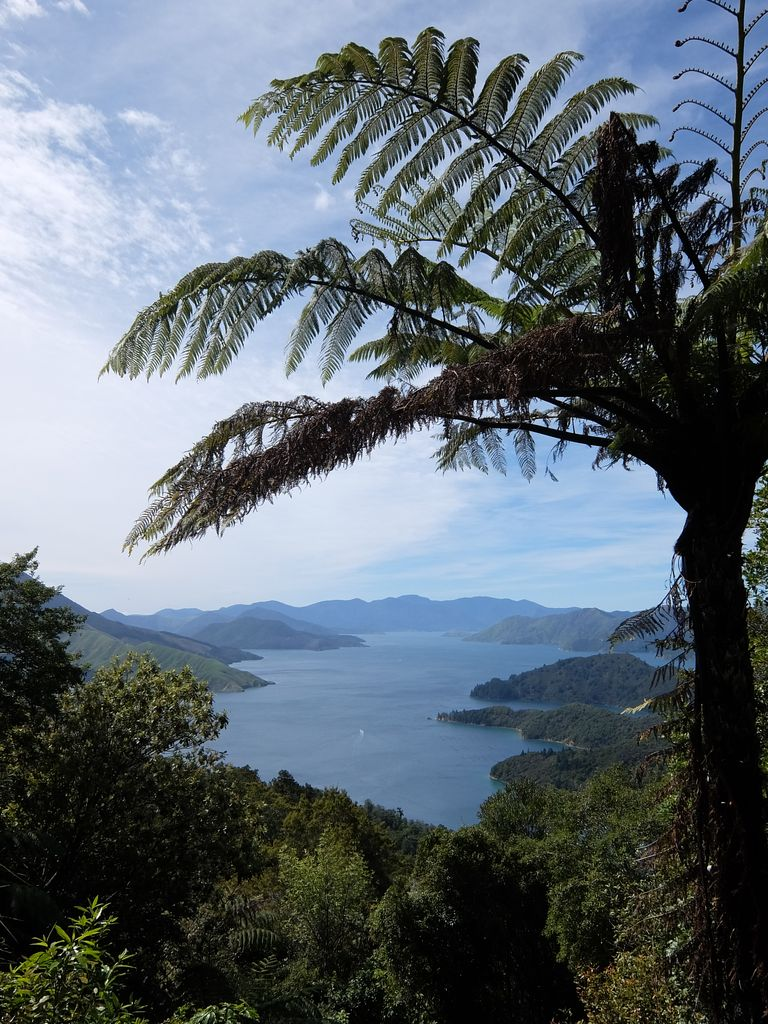 Point de vue sur les Marlborough Sounds