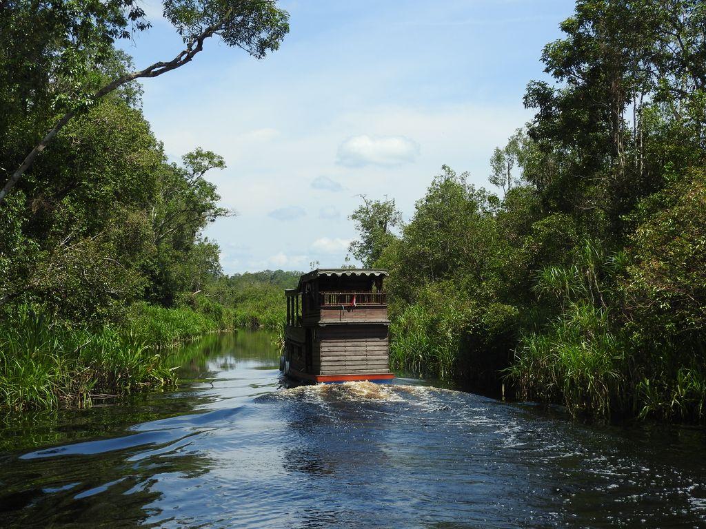 Croisière au Parc national Tanjung Puting